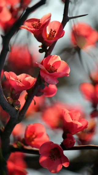 Обои на телефон galaxy, note3, галактика, прекрасные, цветы, цвести, вишня