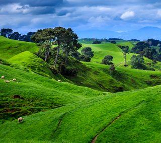 Обои на телефон холм, природа, поле, новый, new zealand