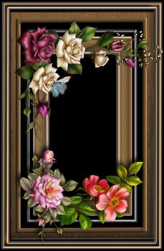 Обои на телефон окно, цветы, фон, розы, приятные, арт, art