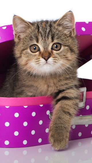 Обои на телефон коробка, милые, котята, lunch, kitty in a box