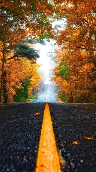 Обои на телефон туман, осень, лес, желтые, дорога, деревья