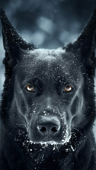 Обои на телефон безумные, черные, собаки, немецкие, german shepherd