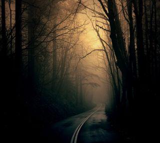 Обои на телефон светящиеся, темные, сияние, свет, прекрасные, лес, конец, дорога, деревья, light at the end, haunting