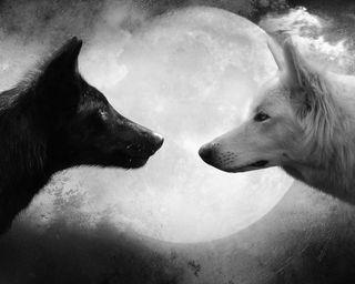 Обои на телефон темные, ночь, луна, животные, волк, сумерки