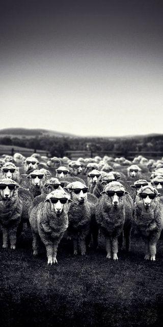 Обои на телефон черные, солнечные очки, овца