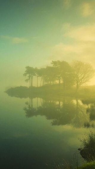 Обои на телефон туман, природа, деревья