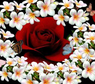Обои на телефон цветы, розы, милые, красые, бабочки, 2160x1920px