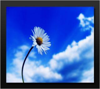 Обои на телефон лепестки, цветы, синие, ромашки, облака, небо, время, весна, белые