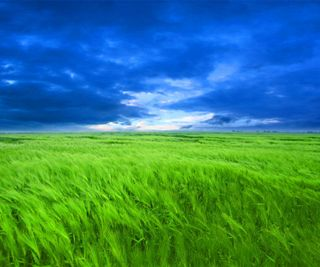 Обои на телефон поле, синие, природа, небо, зеленые