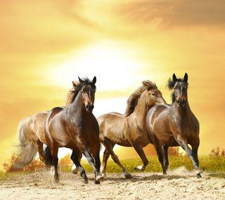 Обои на телефон лошади, бег