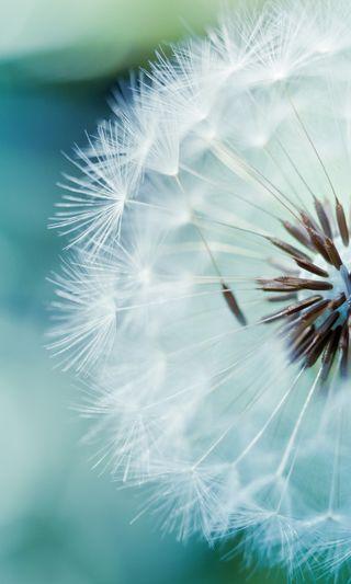 Обои на телефон цветы, природа, пейзаж