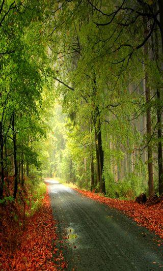 Обои на телефон путь, природа, пейзаж, крутые, way by, cool path, cool nature
