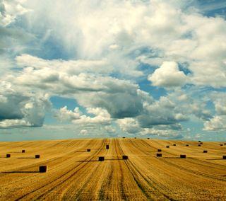 Обои на телефон синие, пшеница, поле, облака, небо, золотые, зерно, вид, hay, distance