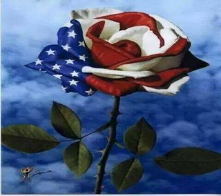 Обои на телефон день, цветы, veterans day flower, veterans day