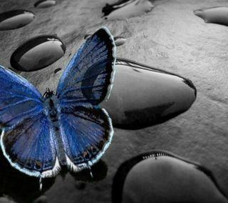Обои на телефон крылья, синие, приятные, новый, капли, животные, вода, бабочки, абстрактные