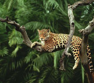 Обои на телефон ягуар, пальмы, лес, кошки, джунгли, дерево