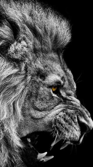 Обои на телефон дикие, черные, лев, животные, белые, wild animals, black and white lion