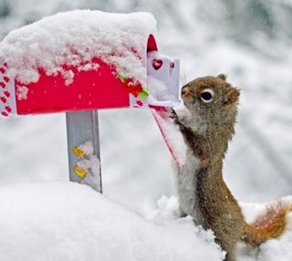 Обои на телефон холодное, снег, зима, животные, белка