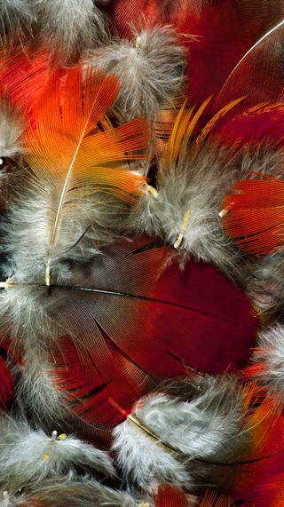 Обои на телефон перья, цветные, текстуры