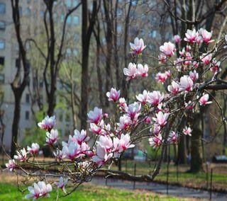 Обои на телефон парк, цветы, симпатичные, расцветает, пейзаж, весна