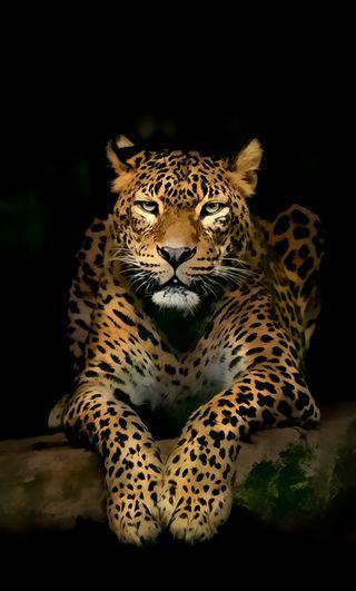 Обои на телефон леопард, животные
