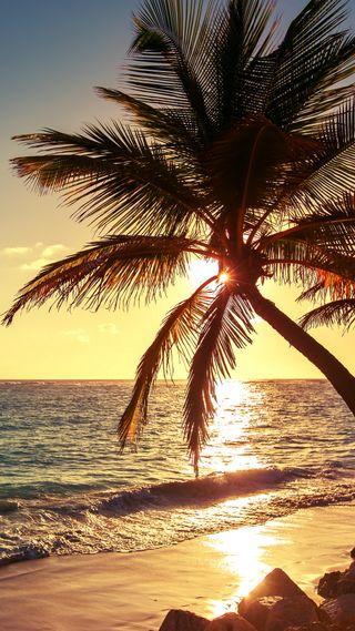 Обои на телефон пальмы, природа, пляж, море, закат, вода, palms beach