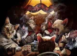 Обои на телефон сигареты, вечеринка, питомцы, милые, кошки, коты, cats partying