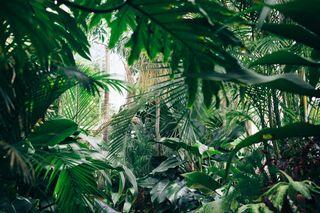 Обои на телефон джунгли, фото, природа, прекрасные