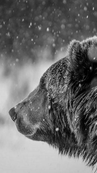 Обои на телефон медведь, снег, животные