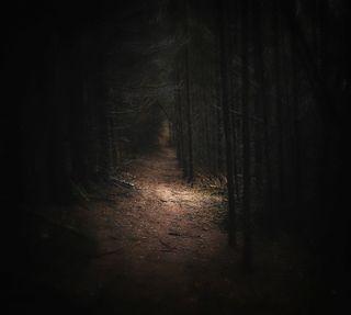 Обои на телефон путь, темные, страшные, лес, жуткие, деревья, gloomy, eerie, a scary path
