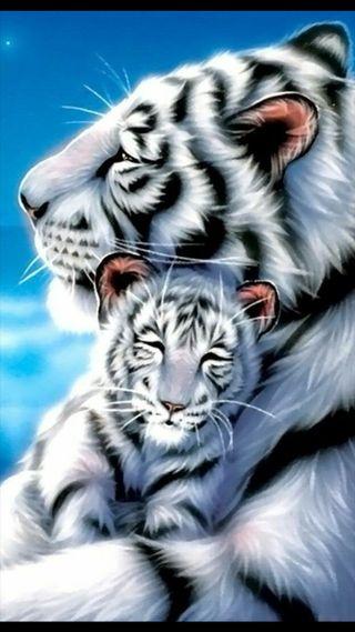 Обои на телефон тигр, мама, малыш, белые, white tiger mother, and baby cub