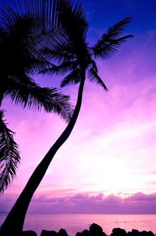 Обои на телефон фиолетовые, пальмы, небо, красочные, закат, purple sky