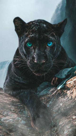 Обои на телефон хищник, пантера, кошки, животные, глаза, hdr, 4k