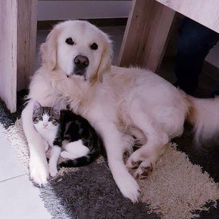 Обои на телефон щенки, собаки, милые, золотые, tiereliebe