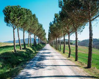 Обои на телефон путь, взгляд, приятные, прекрасные, милые, дорога, деревья, road trees path