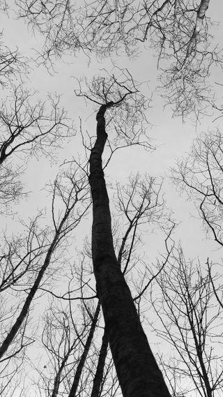 Обои на телефон ужасные, линии, природа, лес, деревья, blackwood