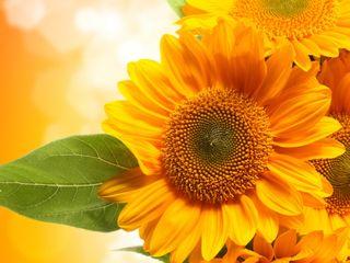 Обои на телефон чудо, цветы, природа, желтые, hd