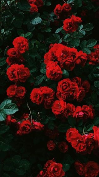 Обои на телефон ткани, цветы, токио, сегодня, розы, рисунки, огонь, наслаждаться, манга, брызги, tumblr, flowers rose
