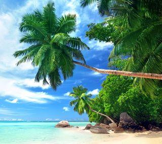 Обои на телефон пальмы, тропические, тропики, пляж, море, лето, берег