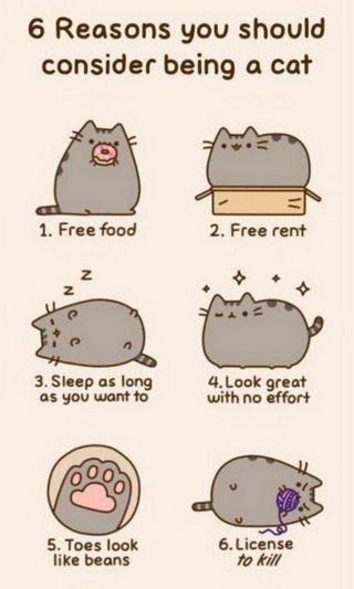 Обои на телефон сон, свобода, кошки, котята, забавные, еда, взгляд, веселые, reasons, kill, 6 reasons