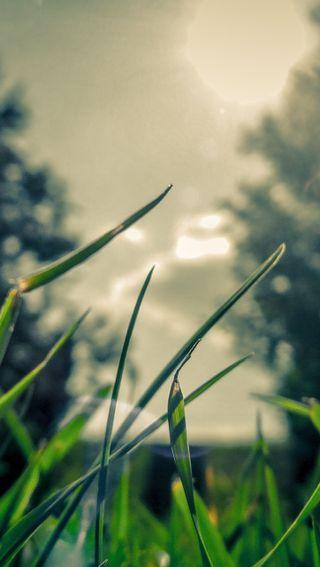 Обои на телефон трава, природа, зеленые