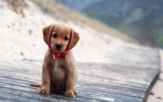 Обои на телефон щенки, собаки, приятные, милые