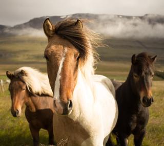 Обои на телефон привет, природа, вдохновляющие, upload, hello horsie, Nature