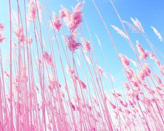 Обои на телефон сад, трава, розовые, природа, skyscape, pink grass