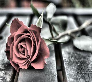 Обои на телефон скучать, розы, любовь, love