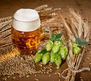 Обои на телефон алкоголь, растения, пиво, напиток, zedgeoktober, vegetable, brew