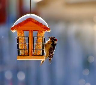 Обои на телефон птицы, любовь, классные, зима, дом, winter bird house, love