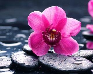 Обои на телефон камни, розовые, прекрасные, орхидея, вода, water stones, beautiful orchid pink, beautiful orchid
