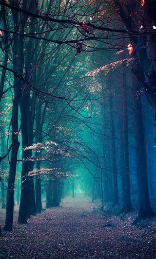 Обои на телефон лес, зима