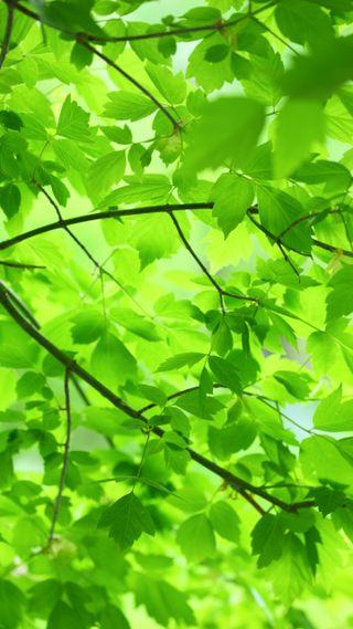 Обои на телефон макро, фотография, природа, листья, зеленые, дерево, ветка